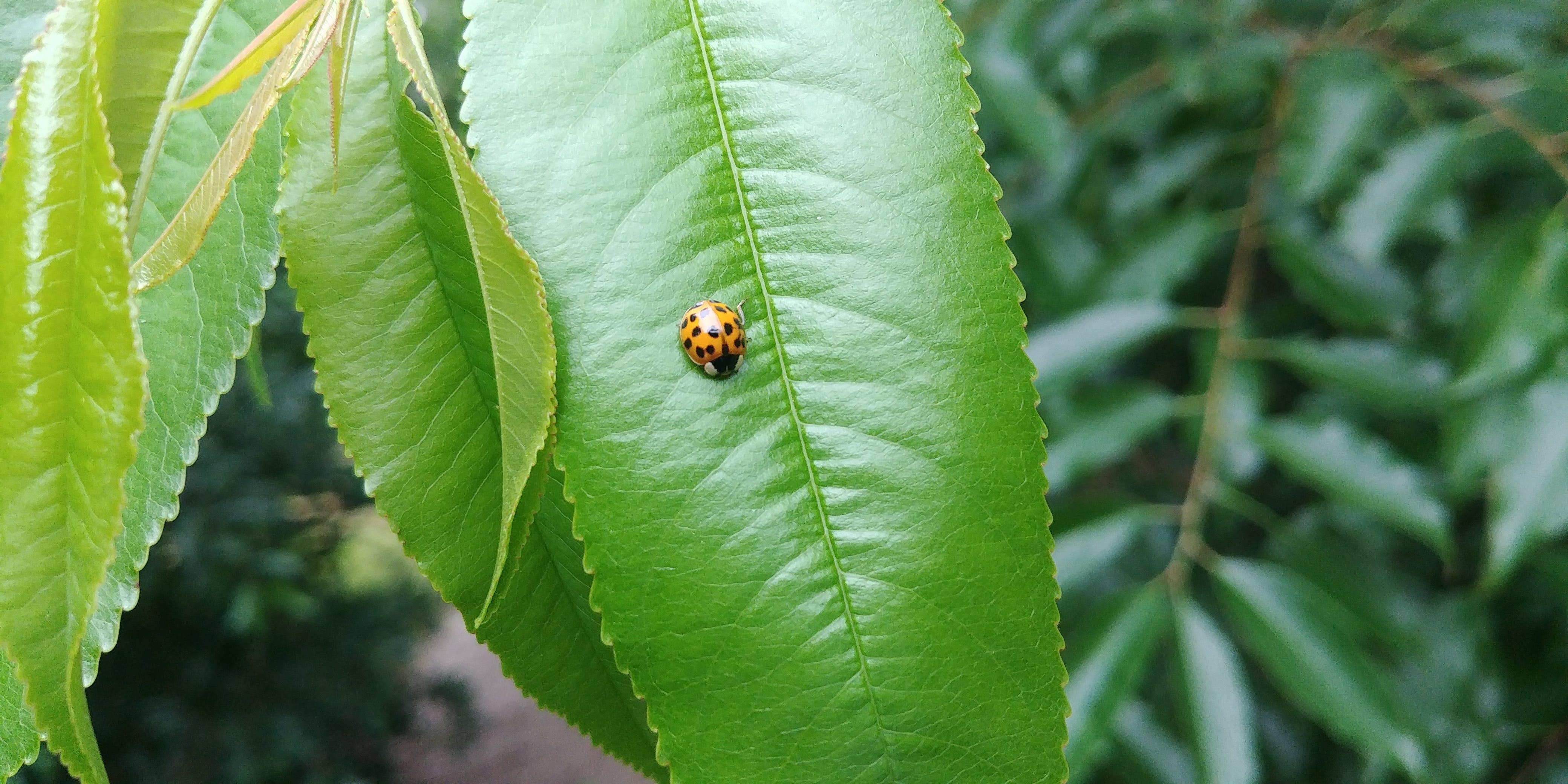 lgg6, 매크로, 무당벌레, 자연의 무료 스톡 사진
