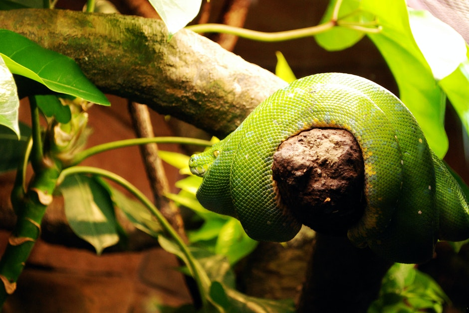 Green Snake on Wooden Branch