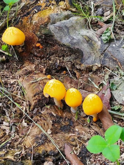 Imagine de stoc gratuită din ciupercă