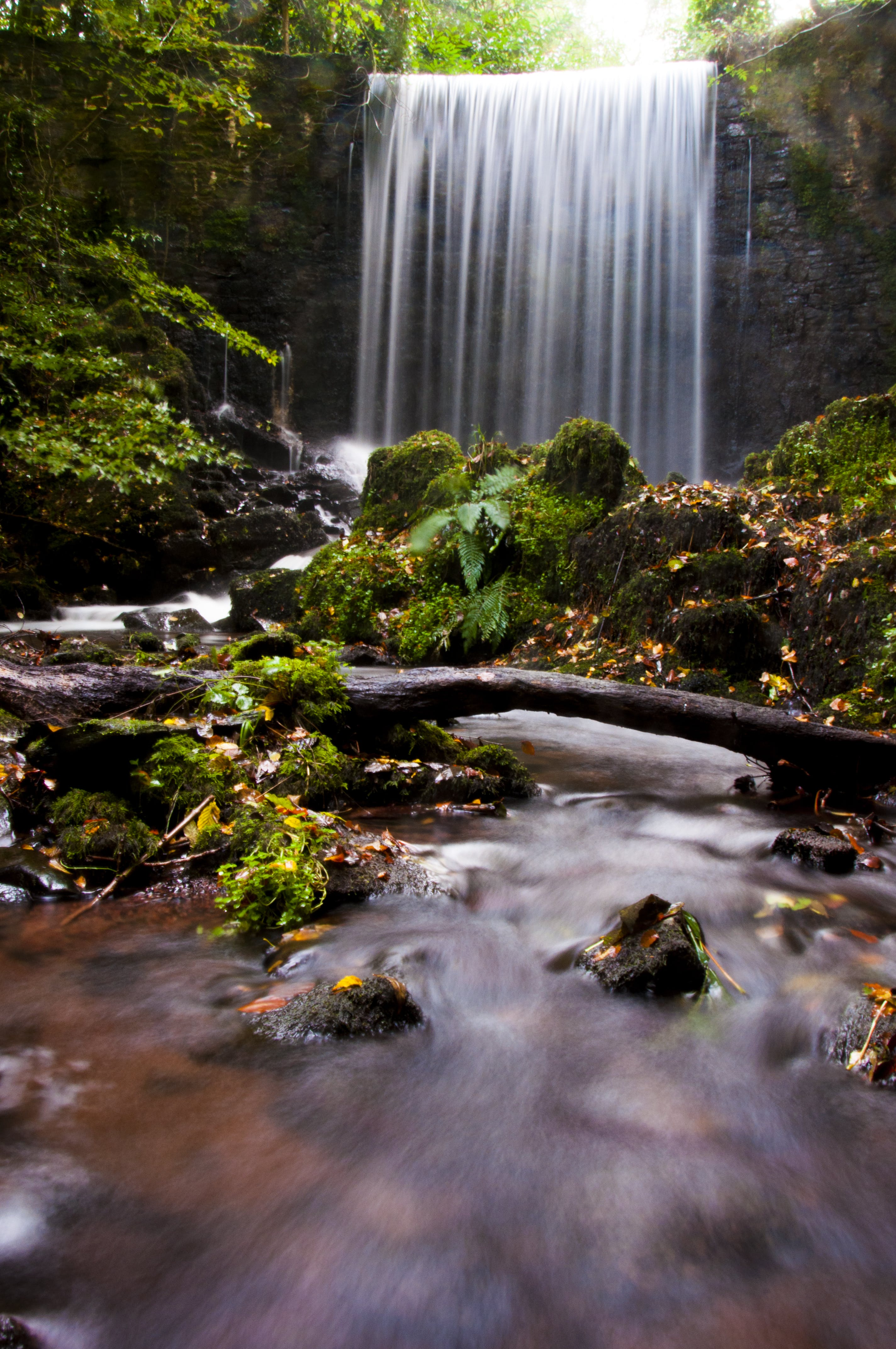 Waterfalls And Green Leafed Trees