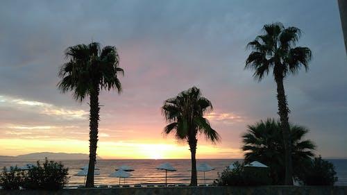 Free stock photo of holiday, palms, sea, sunset