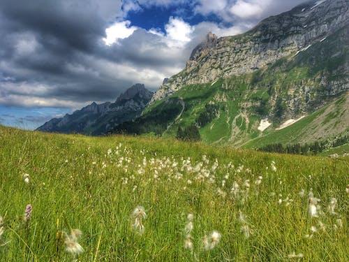 Green Grass Near Mountain