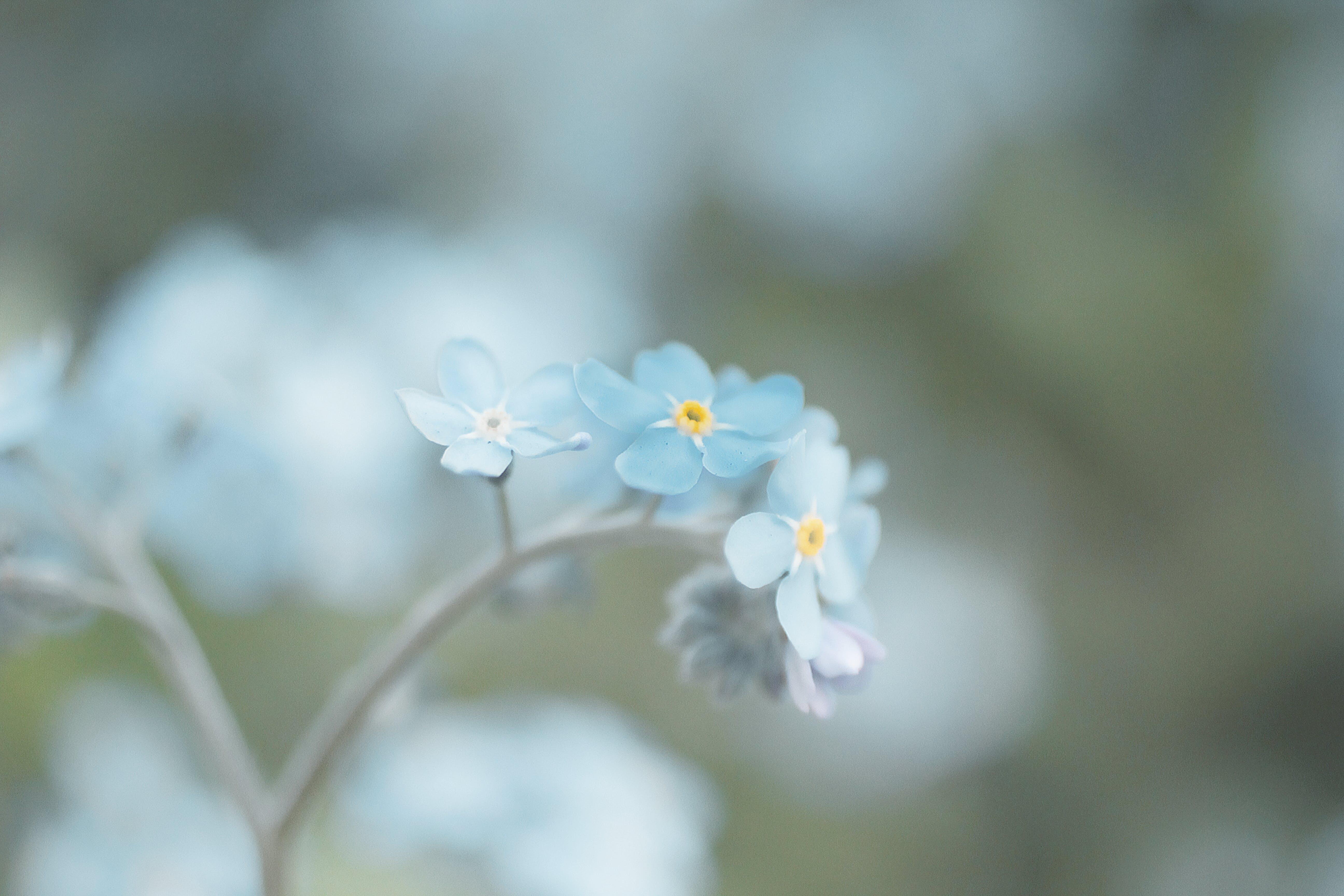 Bahçe, bitki örtüsü, çiçek