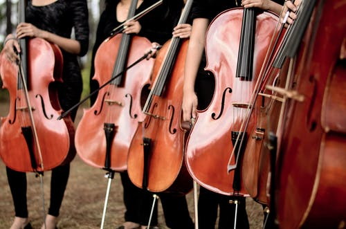 Free stock photo of bowed stringed instrument, cello, cellos