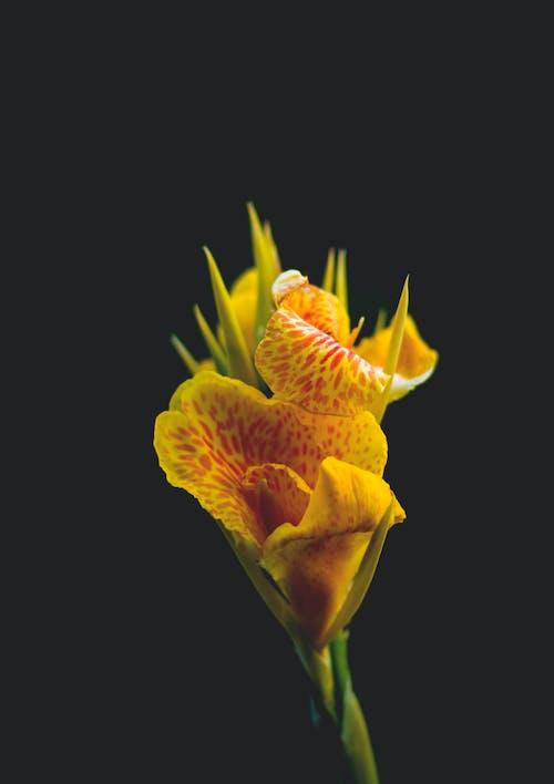 검은색 배경, 꽃, 꽃이 피는, 꽃잎의 로열티 프리 이미지
