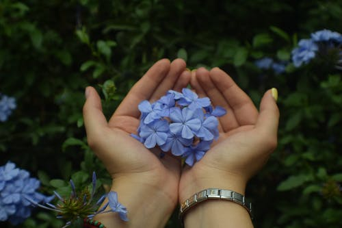 Free stock photo of flowers, green, hands, landscape