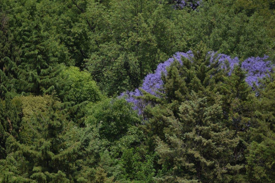 drzewa, fioletowy, krajobraz