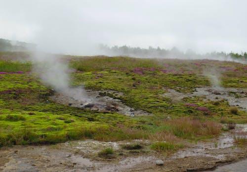 Ingyenes stockfotó Izland, jávorszarvas, láva, természet témában