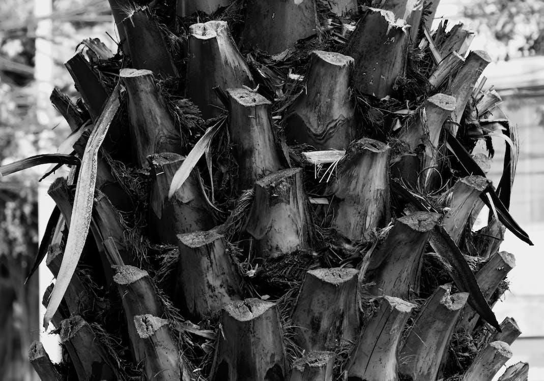 czarno-biały, drzewa, fotografia przyrodnicza