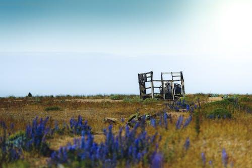 Fotos de stock gratuitas de campo, campos de cultivo, césped, día
