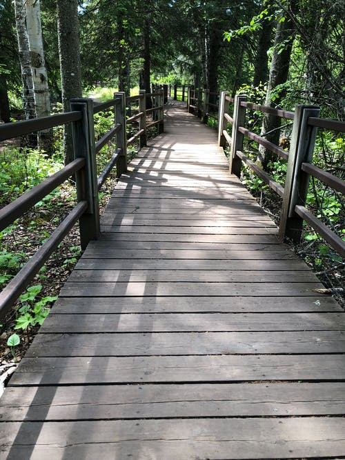 Photos gratuites de chemin de randonnée, chemin ensoleillé, sentier pédestre