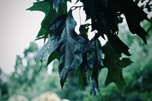 ağaç, bitki, makro, yapraklar içeren Ücretsiz stok fotoğraf