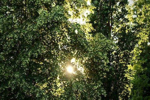 Darmowe zdjęcie z galerii z drzewo, gałęzie, perspektywa, roślina