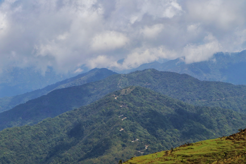 Free stock photo of #forest, #green, #nature, #natureatitsbest