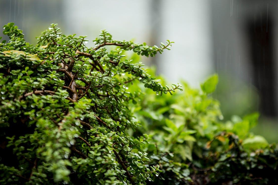 kolory, liście, na dworze