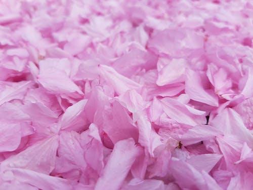 Aşk, beyaz, bitki, bitki örtüsü içeren Ücretsiz stok fotoğraf