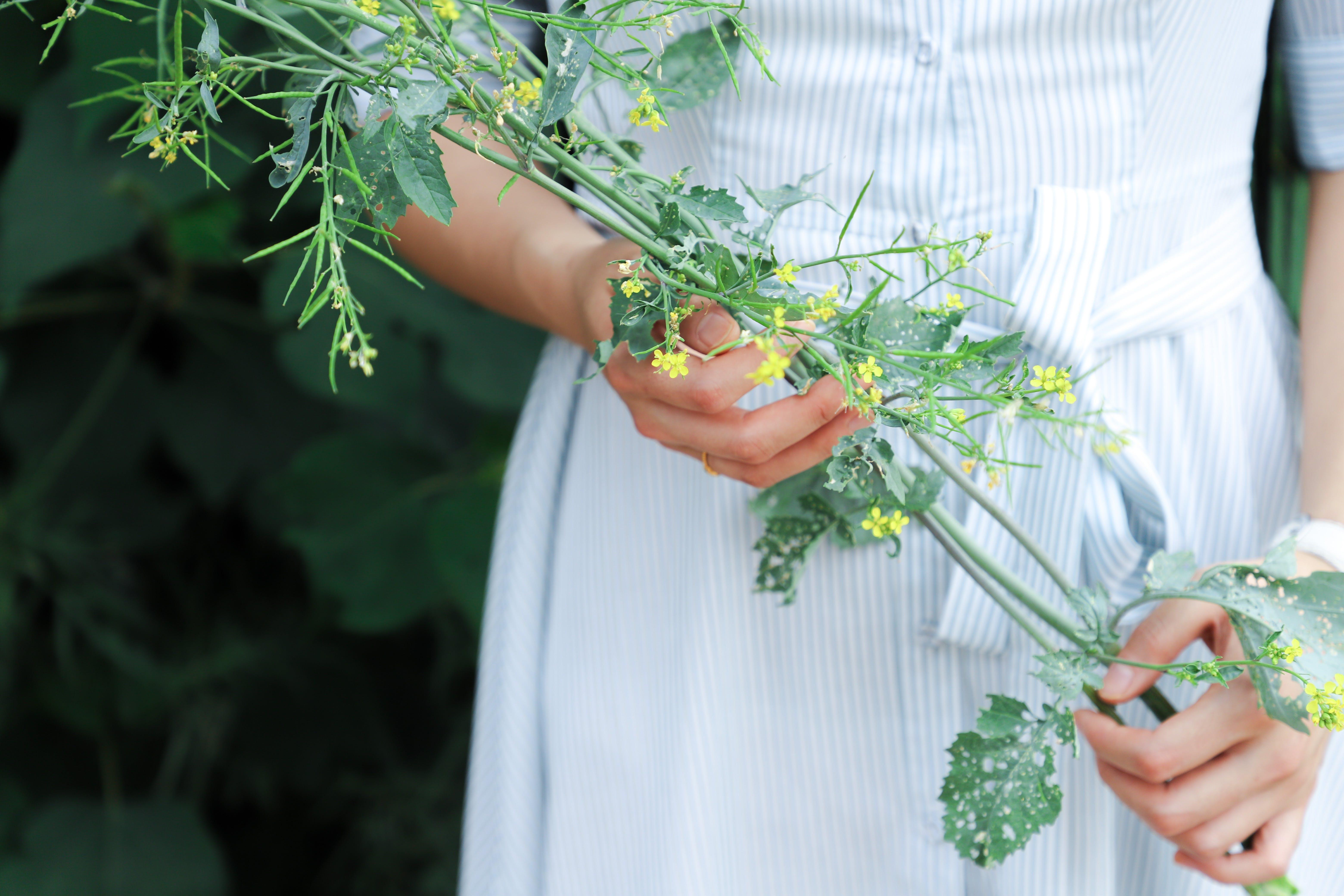 Základová fotografie zdarma na téma holka, rostlina, ruce, žena