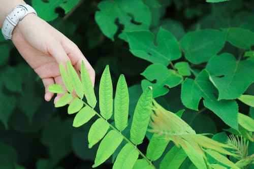 Základová fotografie zdarma na téma dotýkání, rostlina, ruka