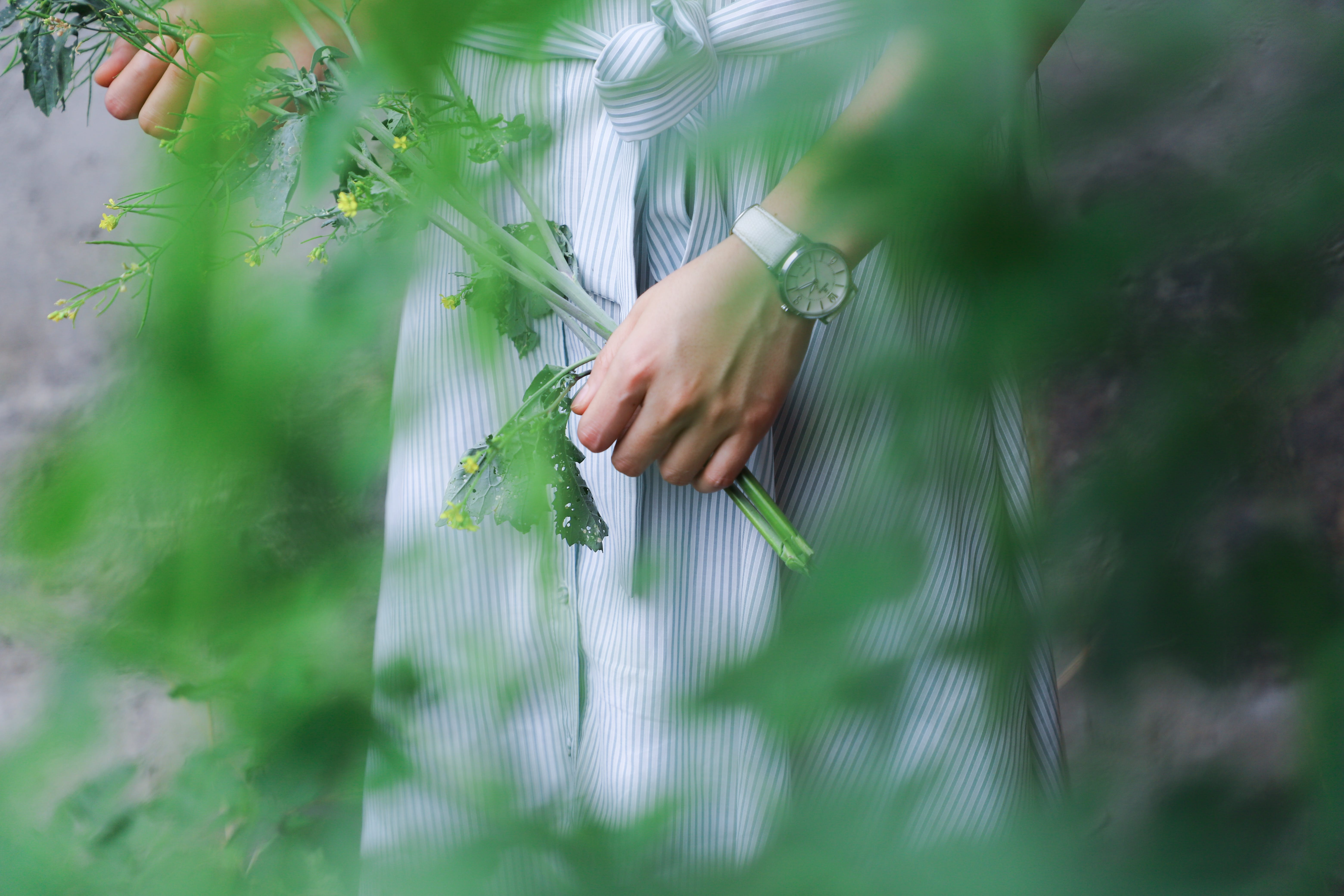 Kostenloses Stock Foto zu blumen, mädchen, pflanze, festhalten