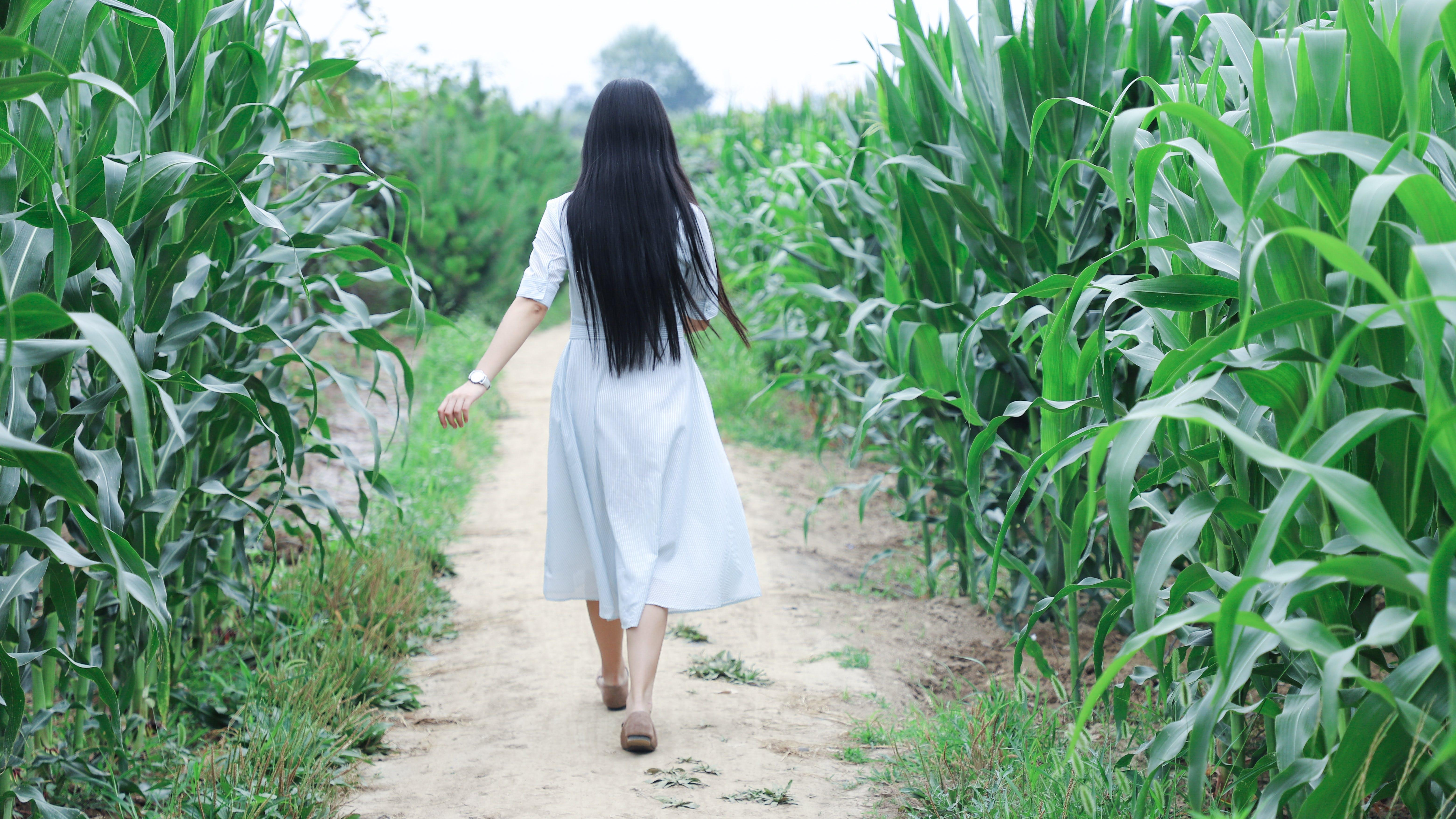 Foto stok gratis bidang, cewek, hijau, kaum wanita