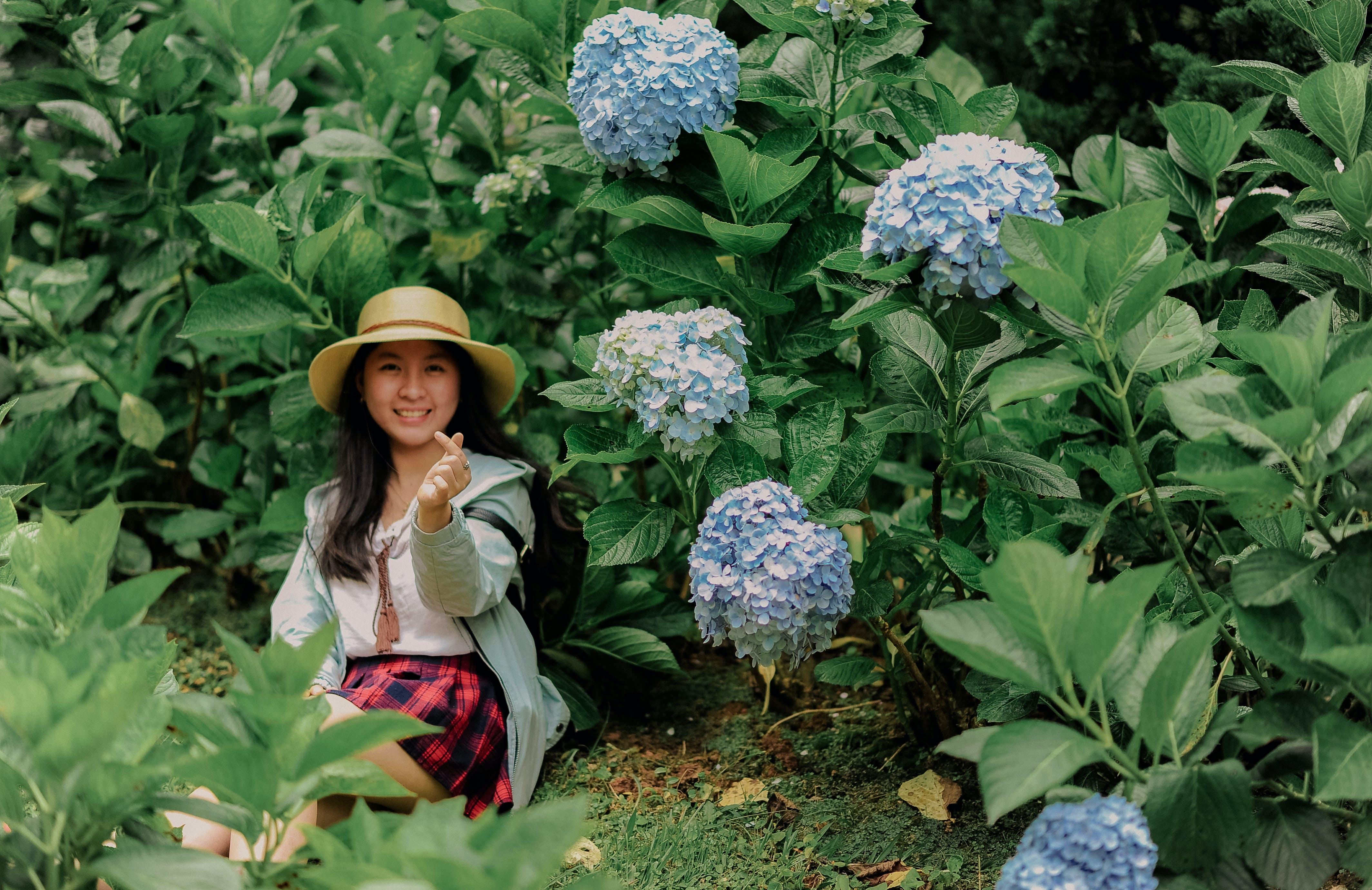 Foto d'estoc gratuïta de asiàtica, bonic, bufó, creixement