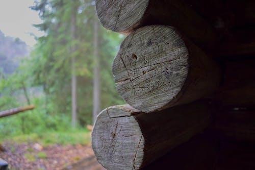 Δωρεάν στοκ φωτογραφιών με #δασάκι, θέα στη φύση, φύση
