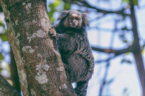 Immagine gratuita di alberi, alla ricerca, ambiente, animale