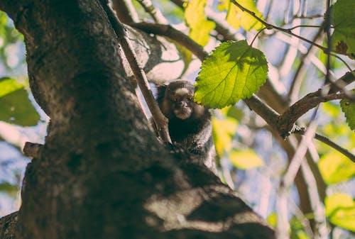 Immagine gratuita di albero, animale, fauna selvatica, fotografia naturalistica