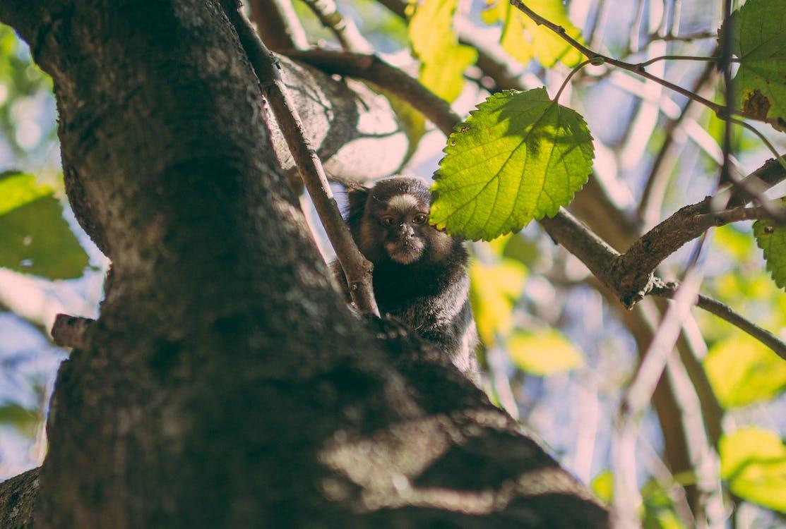 divočina, fotografie divoké přírody, macaco