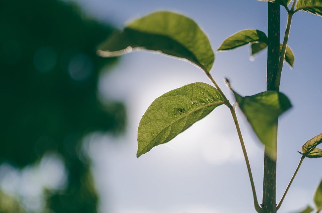 ต้นไม้, พืช, แมโคร
