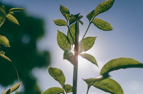 คลังภาพถ่ายฟรี ของ ธรรมชาติ, พืช, ใบไม้