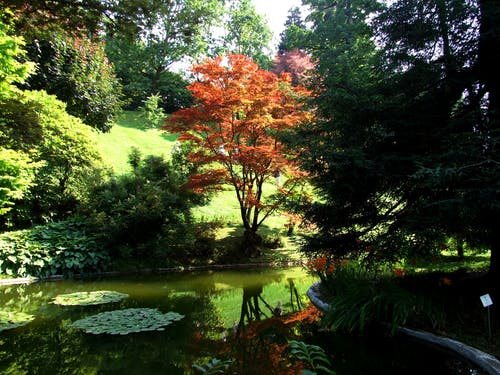 Free stock photo of botanical gardens, gardens, pond, red tree