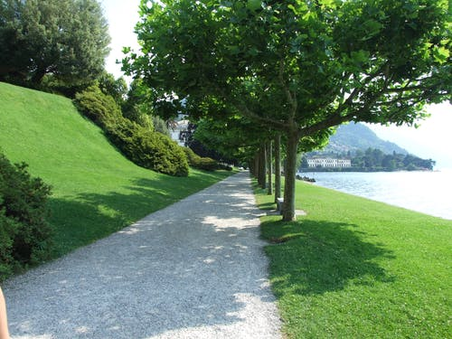 Free stock photo of botanical gardens, grass, lake como, trees