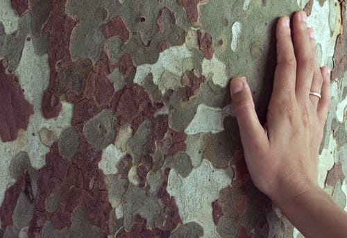 Free stock photo of hand, pattern, tree