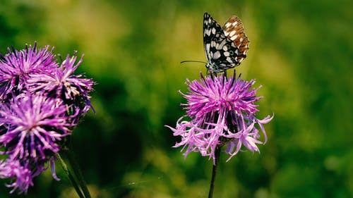 Free stock photo of butterfly, colorful, flower, grass