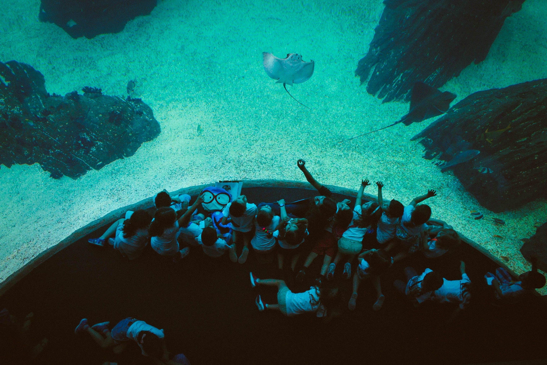 Free stock photo of aquarium, children, ocean, oceanarium