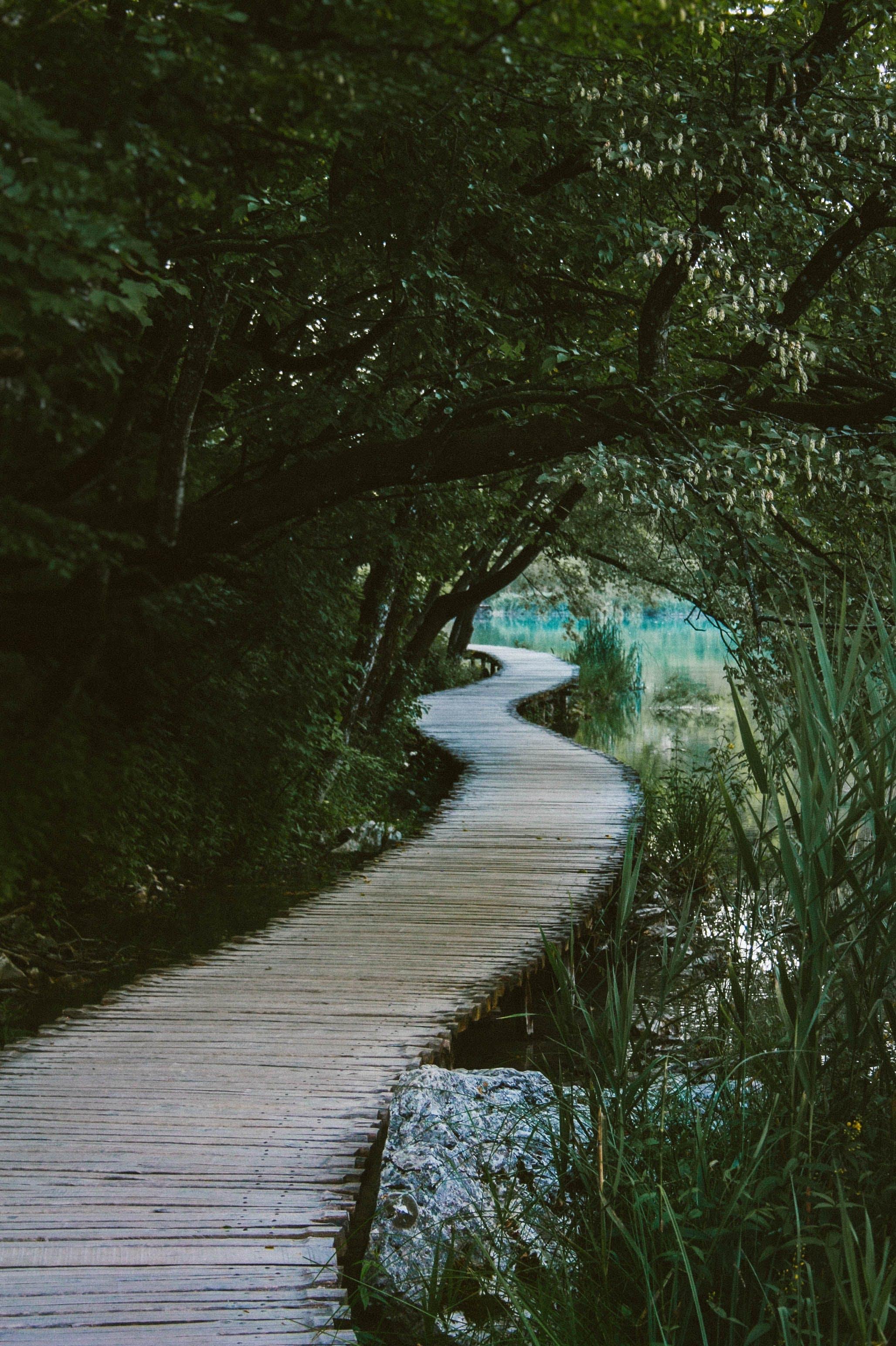 Brown Wooden Bridge Under the Tree Near Body of Water