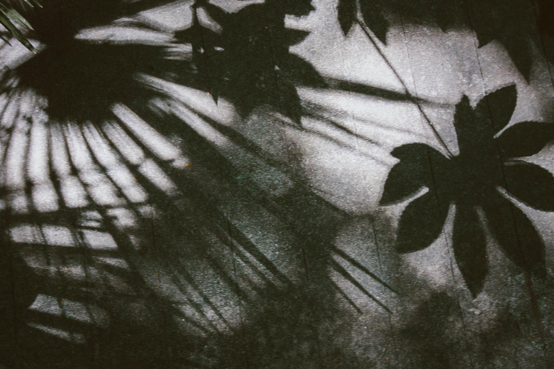 Darmowe zdjęcie z galerii z artystyczny, cień, drzewo, grafika