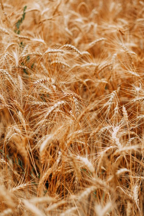 åkermark, bondgård, dagtid