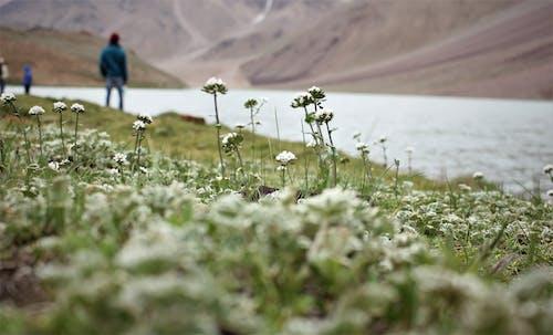 Безкоштовне стокове фото на тему «вода, гори, денний час, зростання»