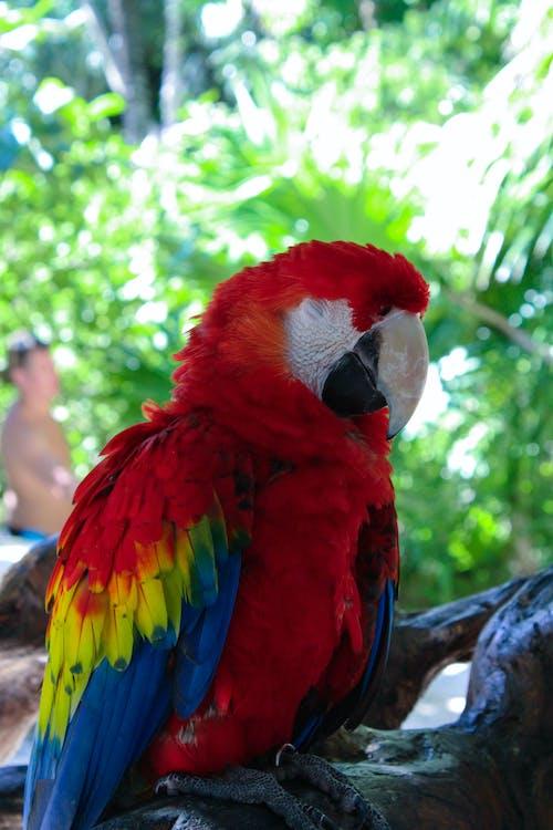 Gratis lagerfoto af Canon, dyr, farve