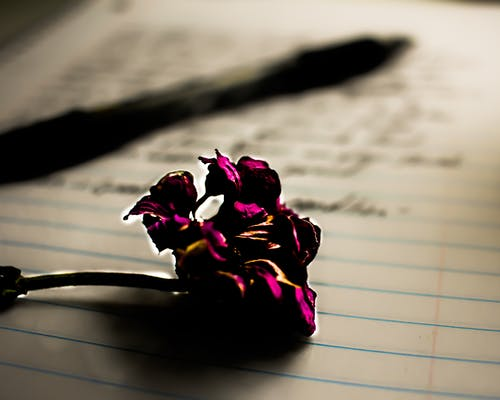 Free stock photo of ball point pen, beautiful flowers, note pad, notebook