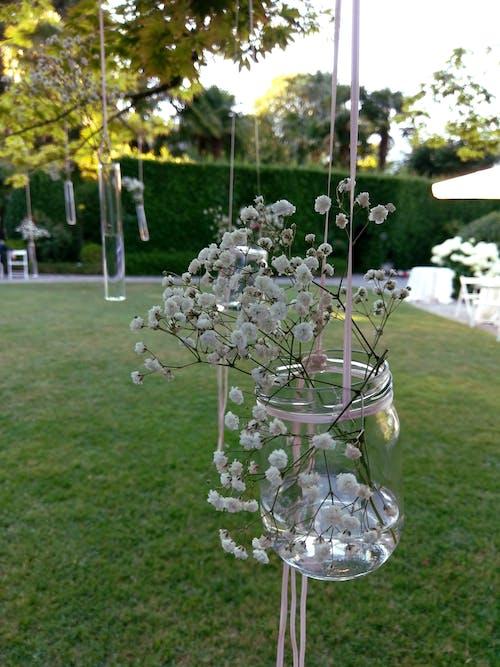 Free stock photo of flowers, glass jar, grass