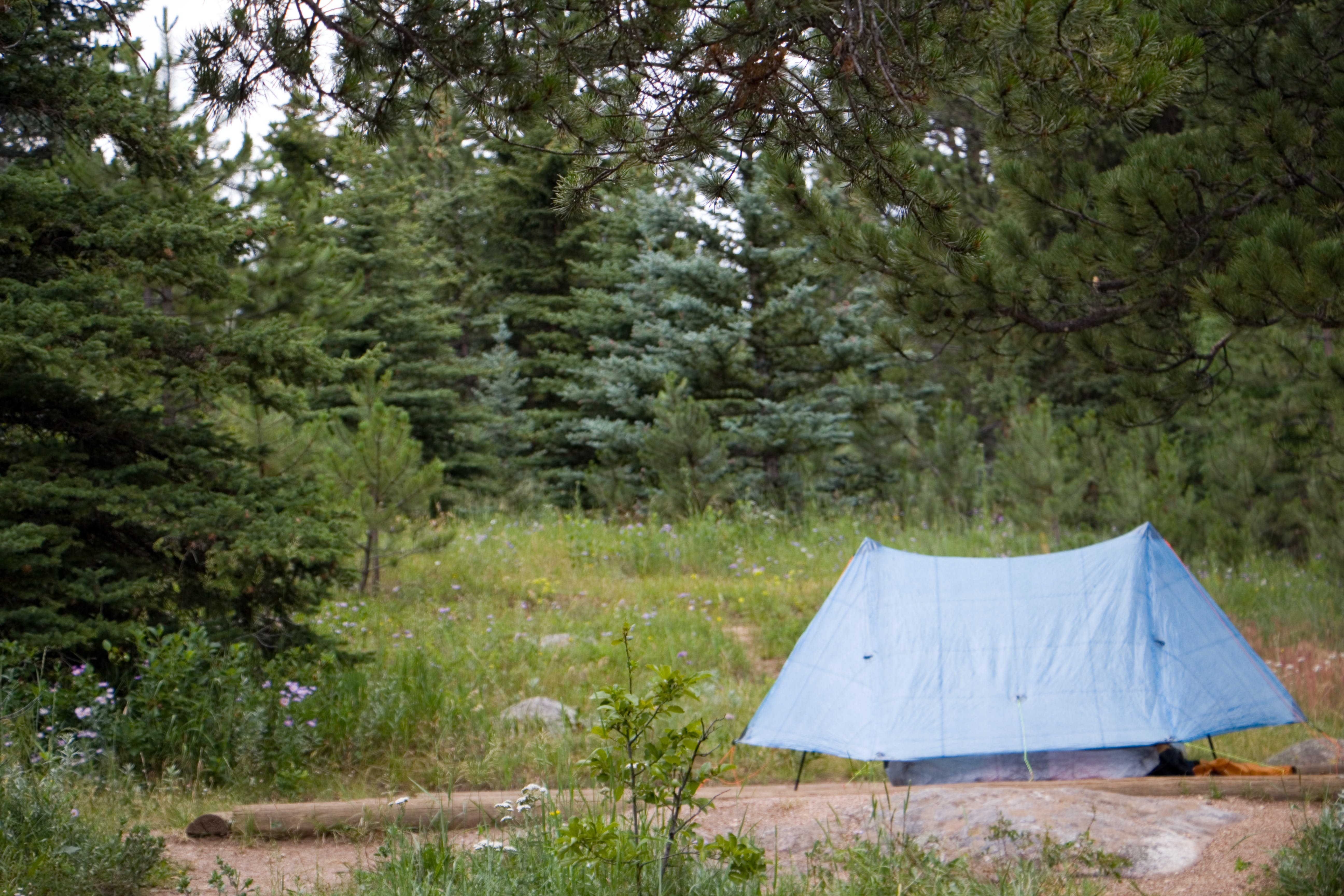 Free stock photo of adventure, camping, forest, nature
