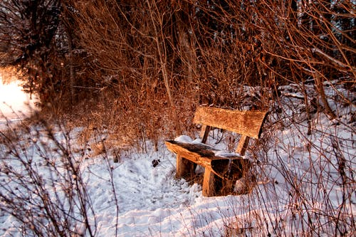 Free stock photo of bank, bench, evening, forest