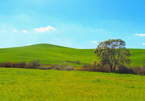 Free stock photo of blue sky, green field, nature