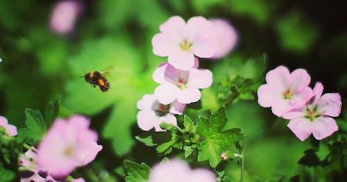 Бесплатное стоковое фото с #bees #flowers #nature
