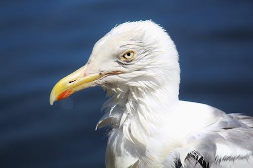 Бесплатное стоковое фото с #gull #seagull #bird #wildlife
