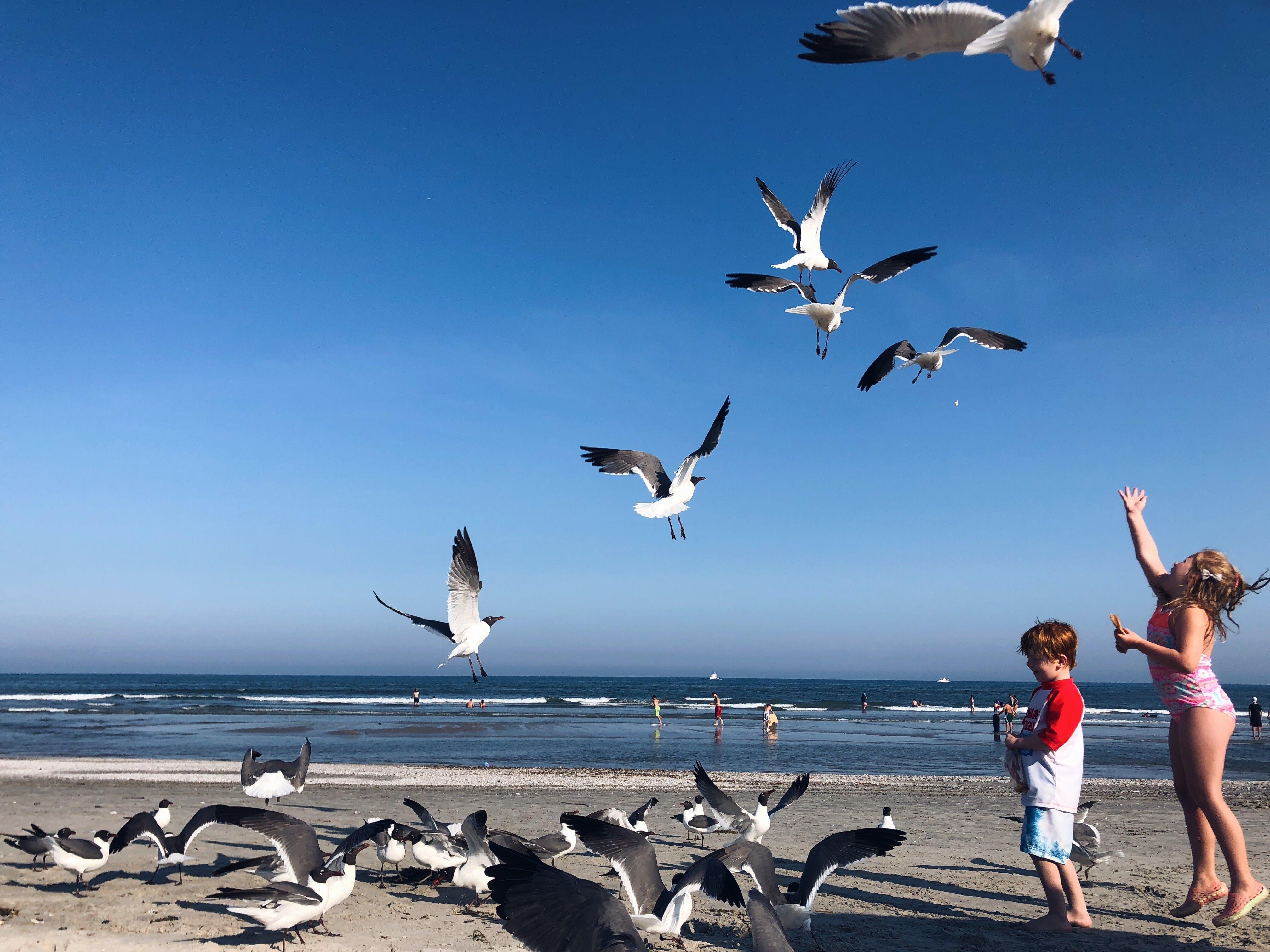 Kostenloses Stock Foto zu strand, ozean, freude, kinder