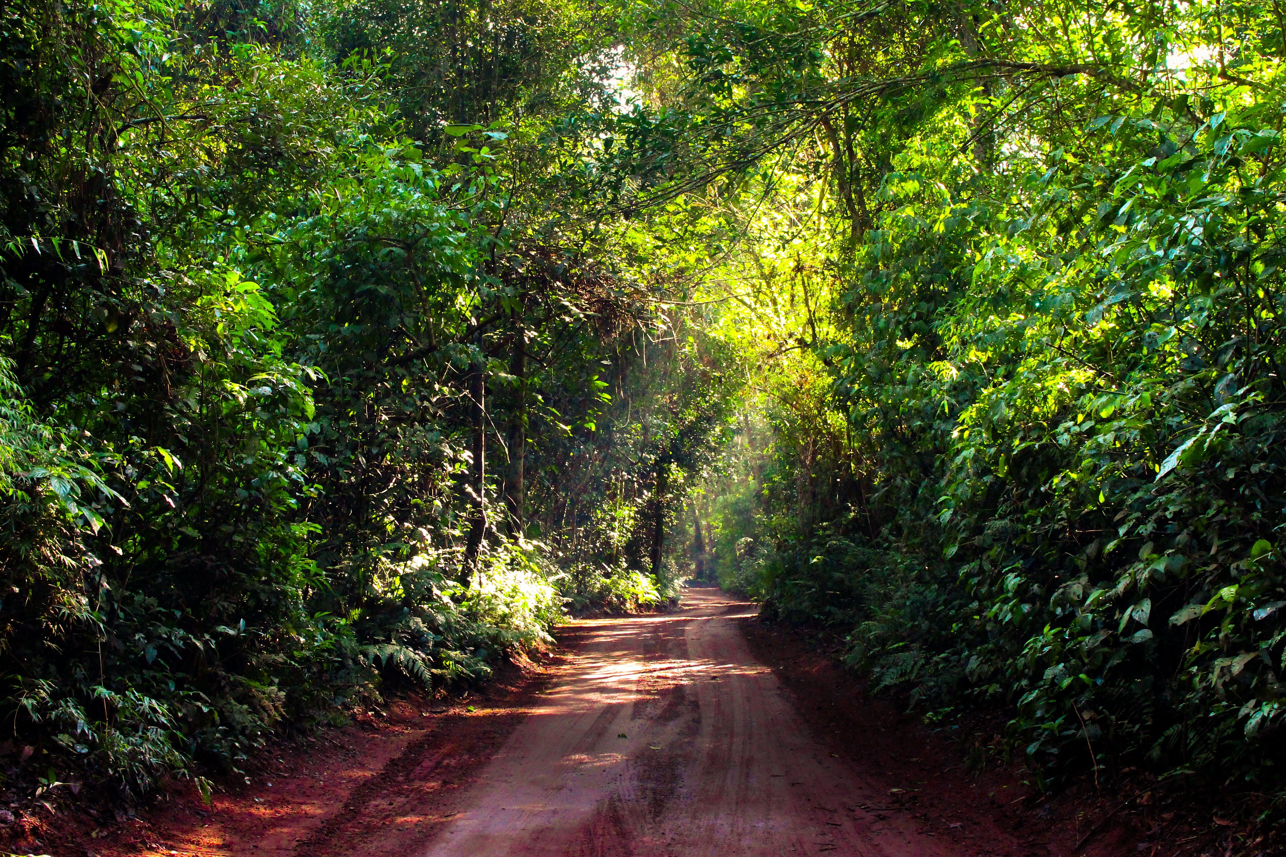Free stock photo of brasil, brazil, dust, enter